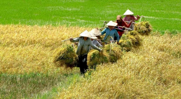 Some limitations of the Vietnamese in the context of international integration