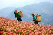 Liên kết vùng trong phát triển du lịch các tỉnh Tây Bắc Việt Nam