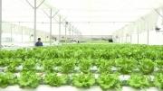 Thúc đẩy kinh tế tuần hoàn trong nông nghiệp tại Đồng Tháp