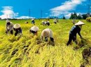 Một số vấn đề đặt ra đối với giai cấp nông dân Việt Nam hiện nay