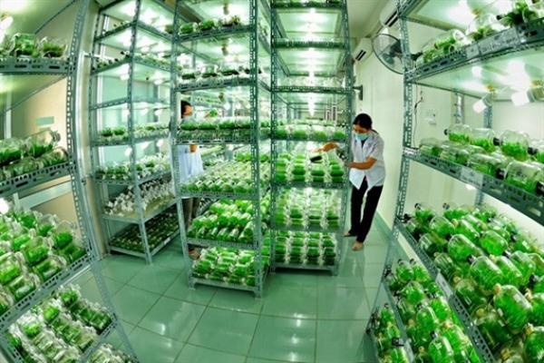 Phát triển nông nghiệp công nghệ cao gắn với cơ cấu lại ngành nông nghiệp nước ta từ góc nhìn thể chế