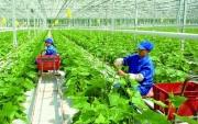 Phát triển nông nghiệp công nghệ cao ở Việt Nam trong bối cảnh Cách mạng công nghiệp lần thứ tư