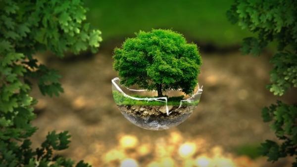 Tôn giáo học sinh thái - Thực tiễn trên thế giới và ở Việt Nam hiện nay
