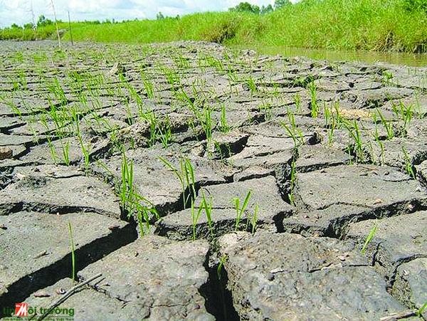 Mối quan hệ giữa con người với tự nhiên và vấn đề giáo dục bảo vệ môi trường ứng phó với biến đổi khí hậu ở Đồng bằng sông Cửu Long hiện nay