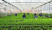 Tỉnh Quảng Ngãi phát triển kinh tế nông nghiệp theo hướng hiện đại, bền vững