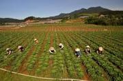 Kiến nghị chính sách nhằm thúc đẩy hợp tác xã nông nghiệp chuyển đổi theo Luật Hợp tác xã năm 2012