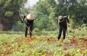Quản lý, sử dụng đất của nông, lâm trường ở Đắk Lắk -  thực trạng, vấn đề đặt ra và giải pháp