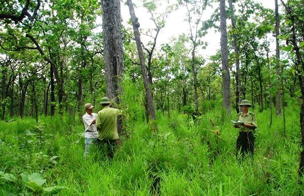Quản lý nhà nước về tài nguyên rừng (qua thực tiễn tỉnh Nghệ An)