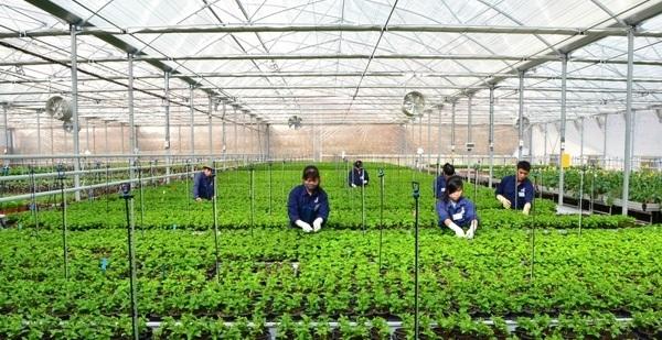 Phát triển tổng hợp vùng nông thôn góp phần giải quyết việc làm: Kinh nghiệm của một số quốc gia