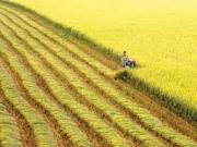 Sự tham gia của Mặt trận Tổ quốc và các đoàn thể chính trị - xã hội trong quá trình xây dựng nông thôn mới ở khu vực đồng bằng sông Cửu Long
