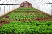 Hải Dương phát triển kinh tế nông nghiệp theo hướng hiện đại và bền vững