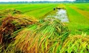 Vấn đề quản lý quy hoạch, kế hoạch sử dụng đất của chính quyền cấp tỉnh vùng đồng bằng sông Hồng