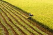 Một số kinh nghiệm tái cơ cấu sản xuất nông nghiệp ở tỉnh Đồng Tháp
